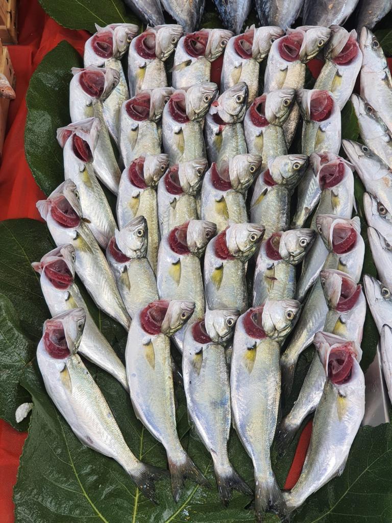 Mis Balık MALTEPE ONLİNE BALIK SİPARİŞİ VER