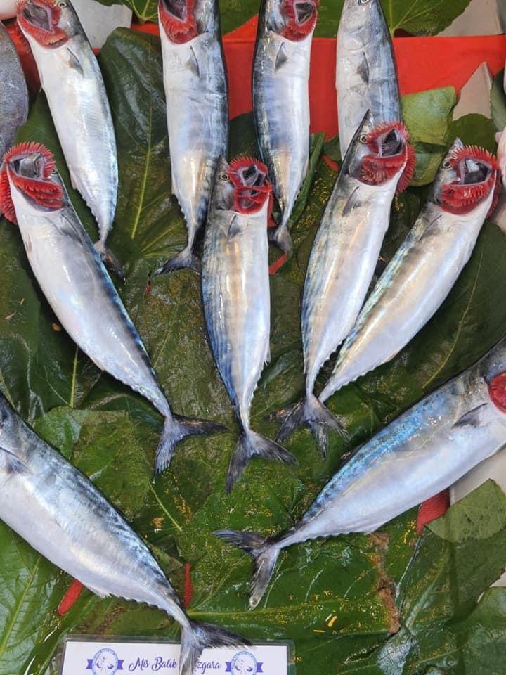 Mis Balık | MİS BALIK İLE EVDE BALIK YENİR